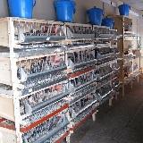 Перепелиная мини ферма, комплект оборудования