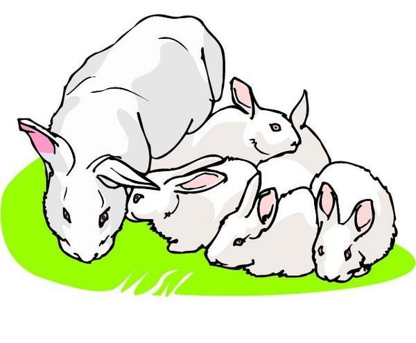 Оборудование для кролиководства