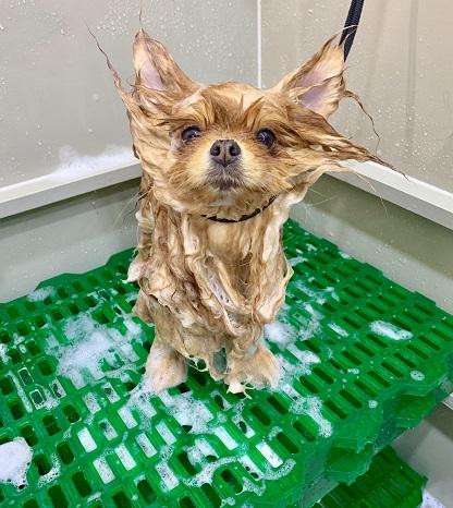 Ванна для мойки животных