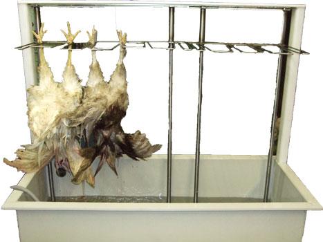 ванна шпарки птицы