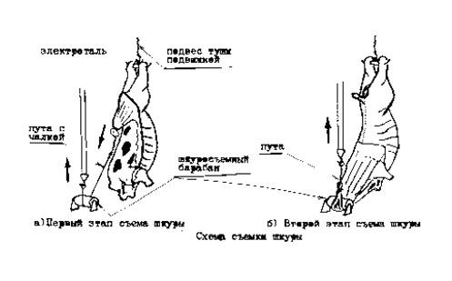 схема работы шкуросъемного агрегата